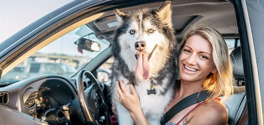 Transporting Your Dog Across Country Safely